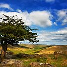 Dartmoor by Dave Hare
