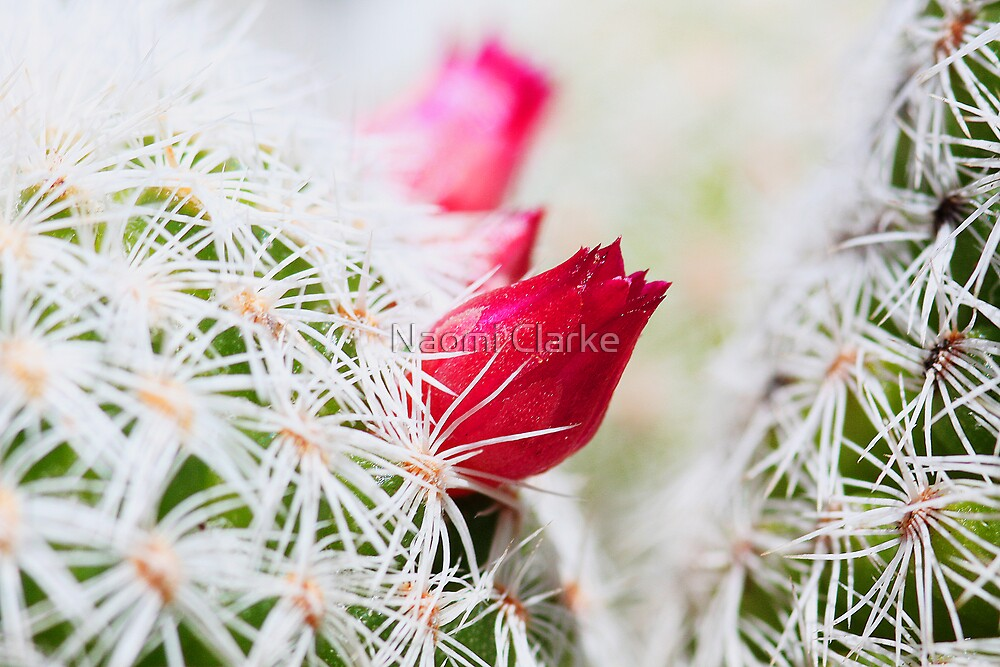 Prickled Pink by Naomi Clarke