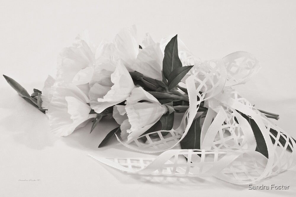 Ribboned White Godetia Flowers by Sandra Foster