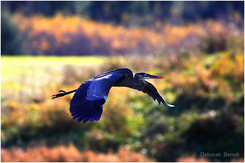 Late Afternoon Flight by Deborah  Benoit