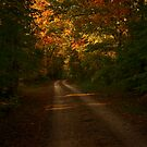 Tennessee Country Road by Richard G Witham