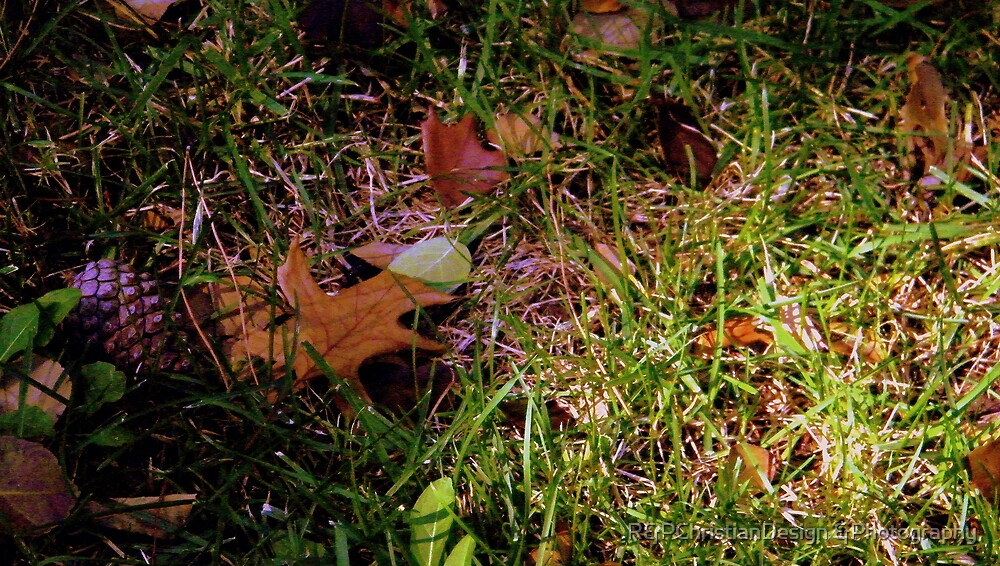 Autumn by R&PChristianDesign &Photography