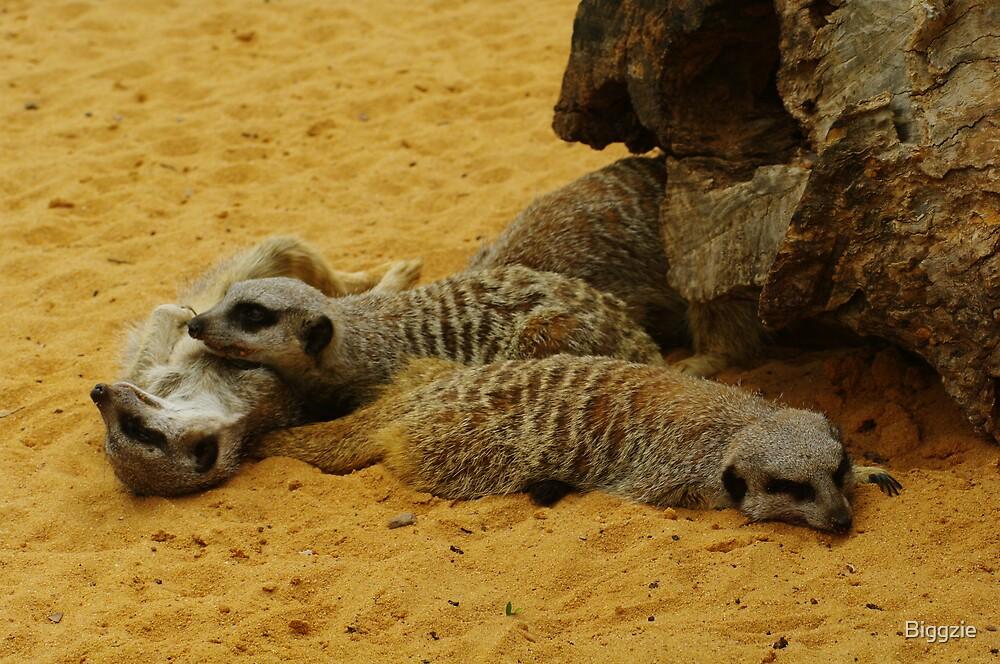 Meerkats by Biggzie