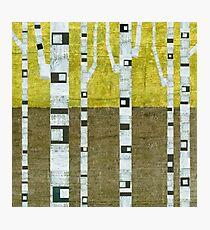 Fall Birches Photographic Print