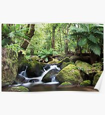 Beeches waterfall, Marysville Poster