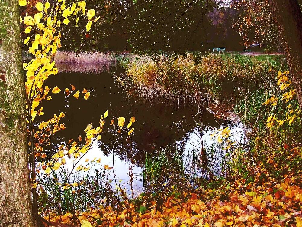 color fall by panasonik