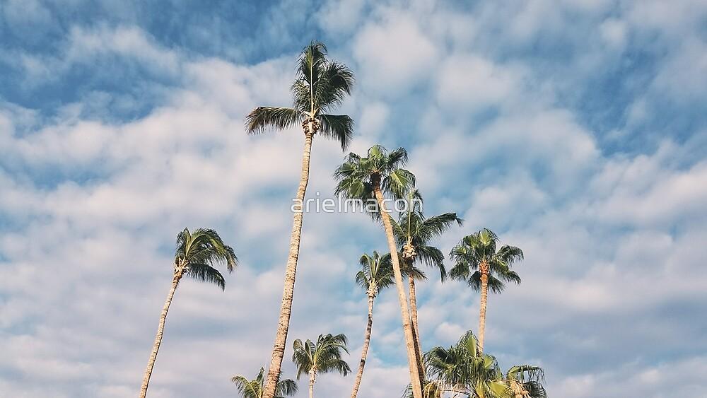 Palm Tree Skies by arielmacon