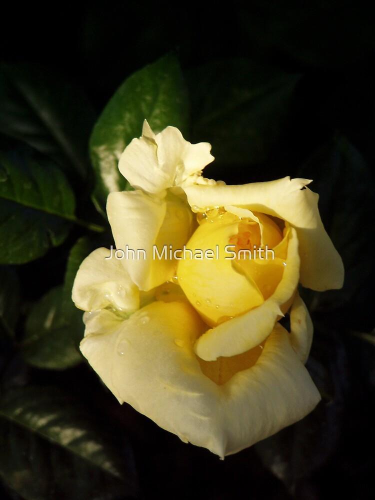 Papa's Rose #1 by John Michael Smith