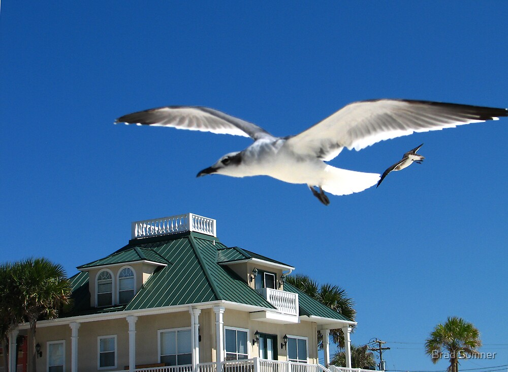 Seagull in Flight by Brad Sumner