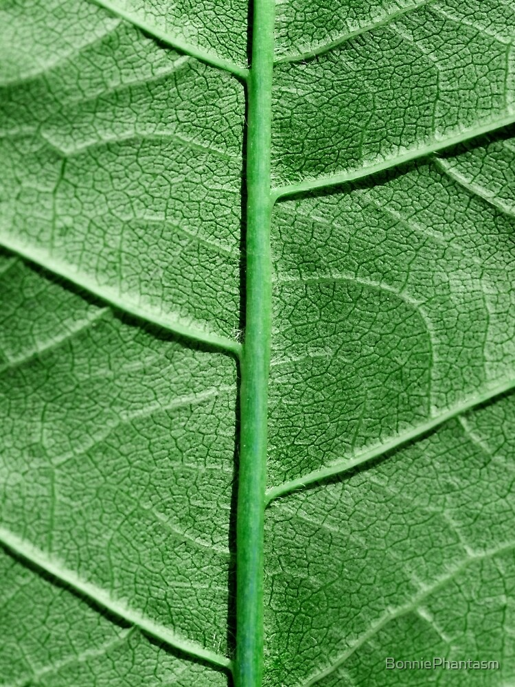 Veined Green Leaf by BonniePhantasm