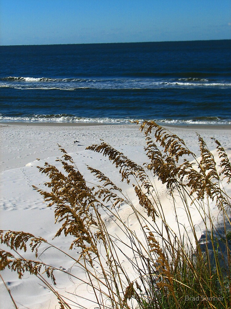 Sea Oats and Sand Dunes by Brad Sumner