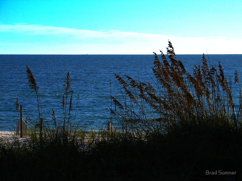 Sand Dunes and Sea Oats by Brad Sumner