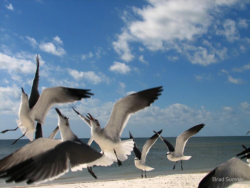 Seagull Aerobatics by Brad Sumner
