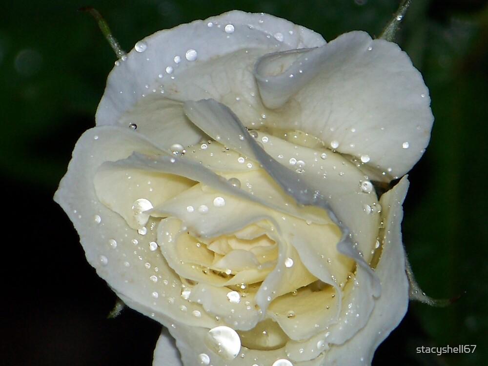 White Rose Rain by stacyshell67