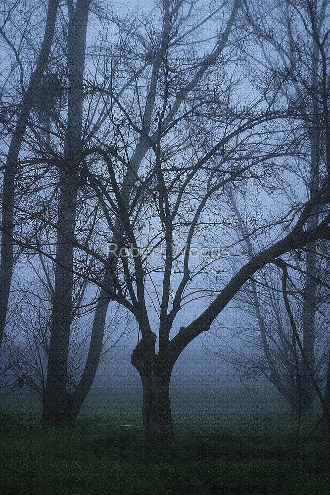 Trees in the fog  by Robert Woods