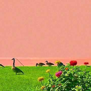 Ducks in a row. by craftyordie