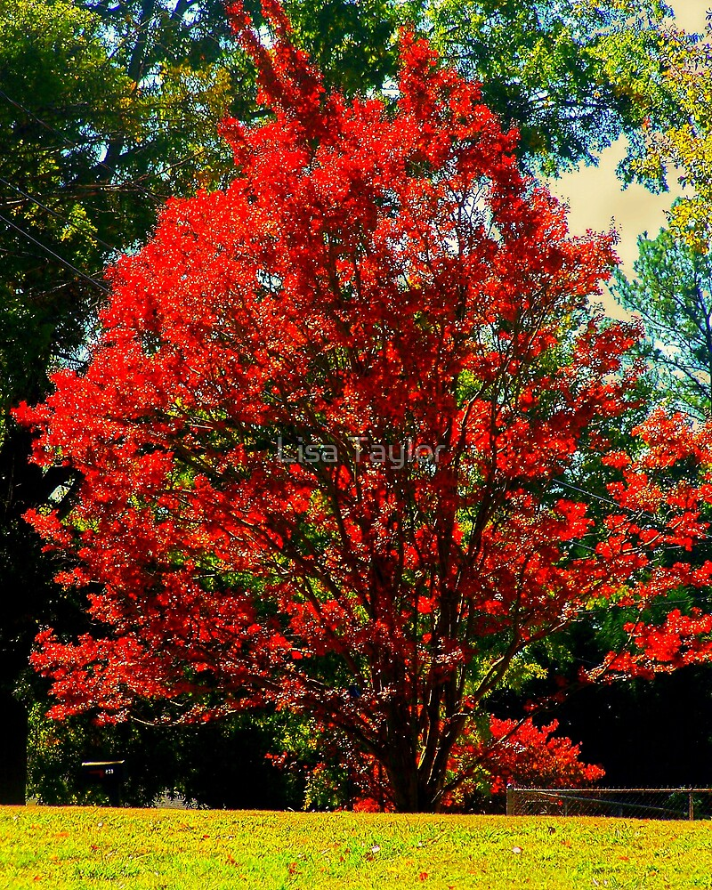 Burning Bush by Lisa Taylor
