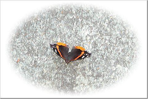 Butterfly by danabee