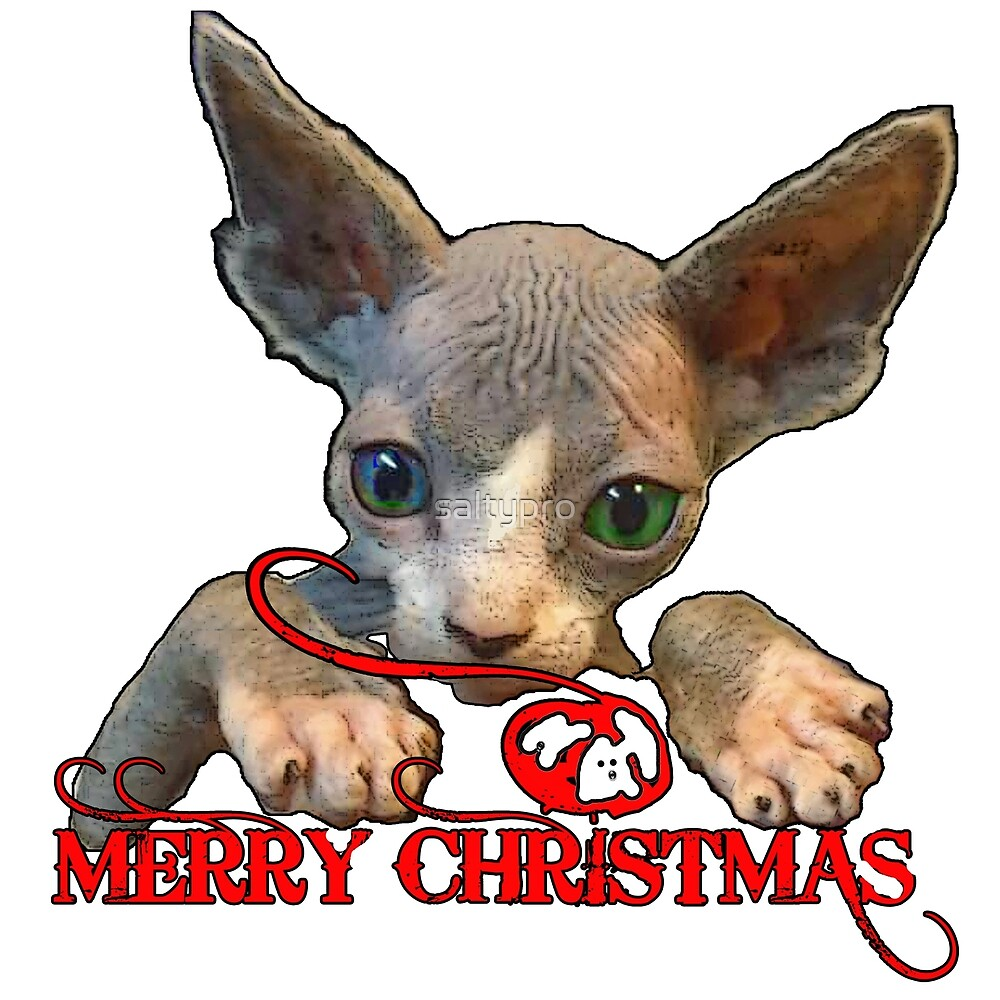 Christmas Kitty, Merry Christmas by saltypro