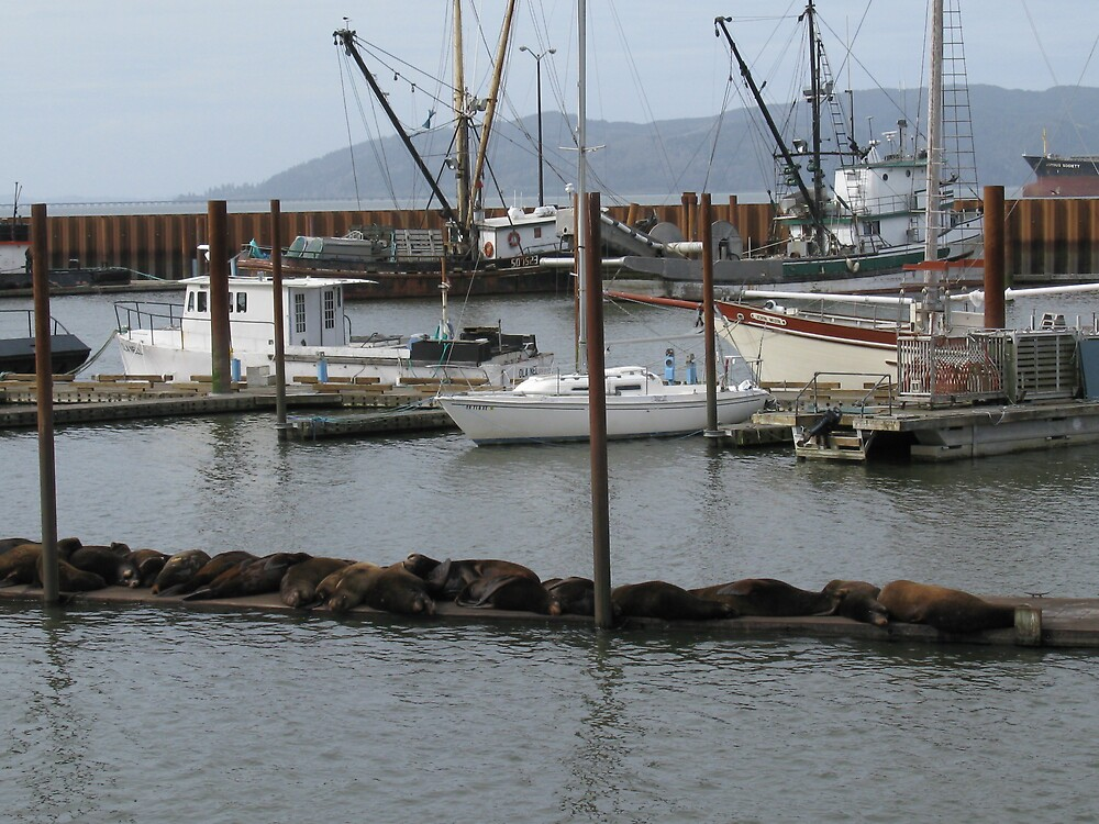 resting dock by TERRYESTELLE1
