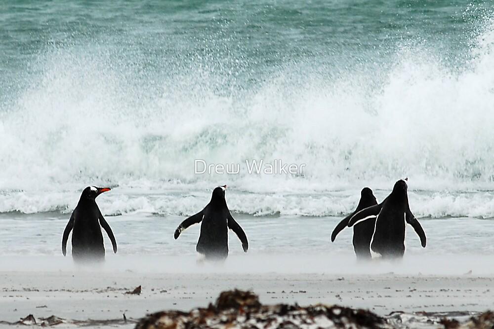 Penguins by Drew Walker