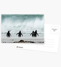 Penguins Postcards