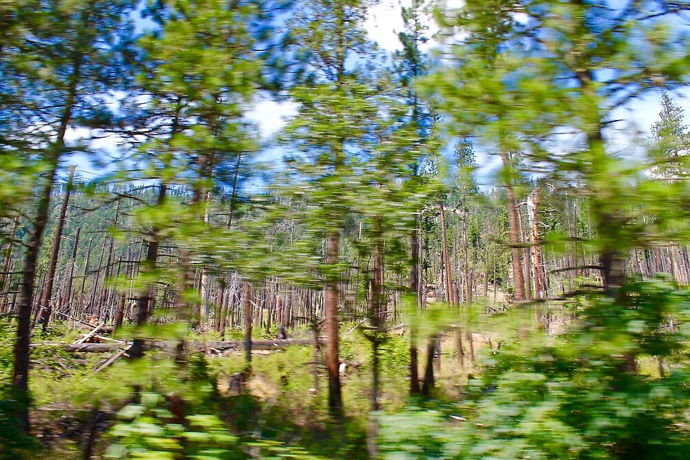 Tree Blur (Drive By Photography) by DTrickta