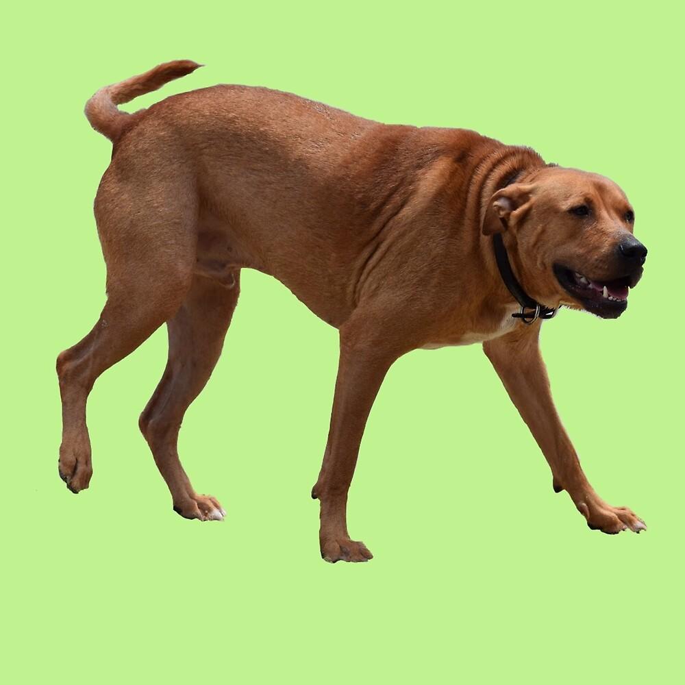 The Walking Dog by Lauren  Gunger