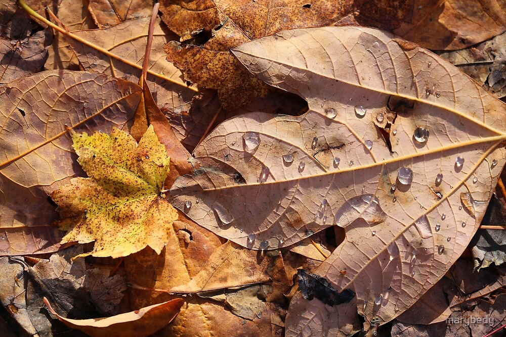 Fall Leaves and Dew 9 2017 by marybedy