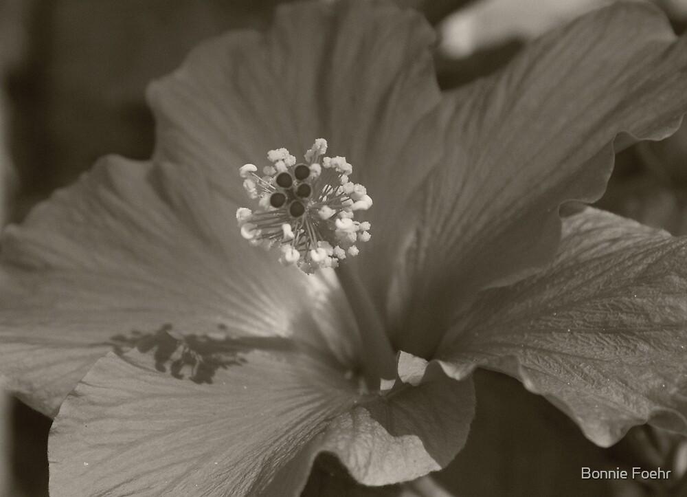 Hibiscus 2 by Bonnie Foehr