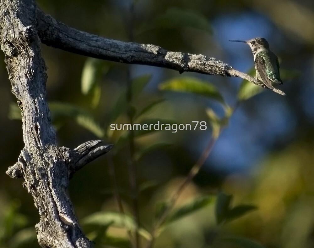 humming bird by summerdragon78