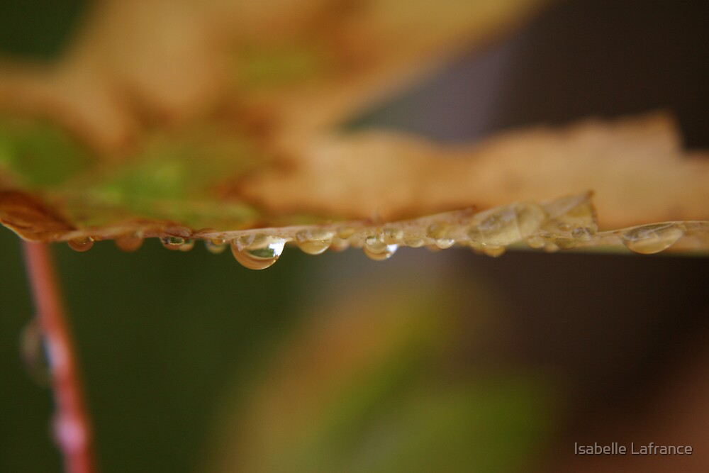 Autumn is dropping by... by Isabelle Lafrance