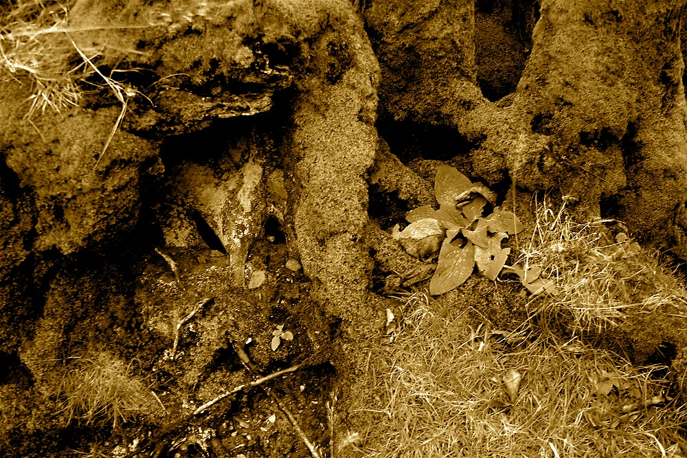 Rooted 14 by Amanda Gazidis