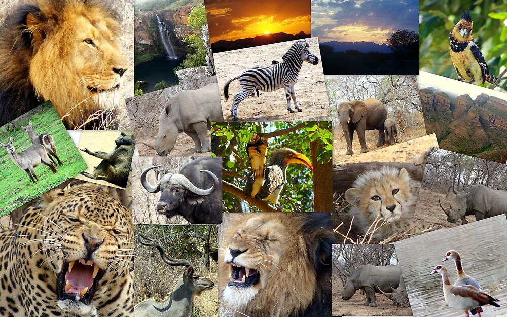 MY SOUTH AFRICA by Andrew Van Der Walt