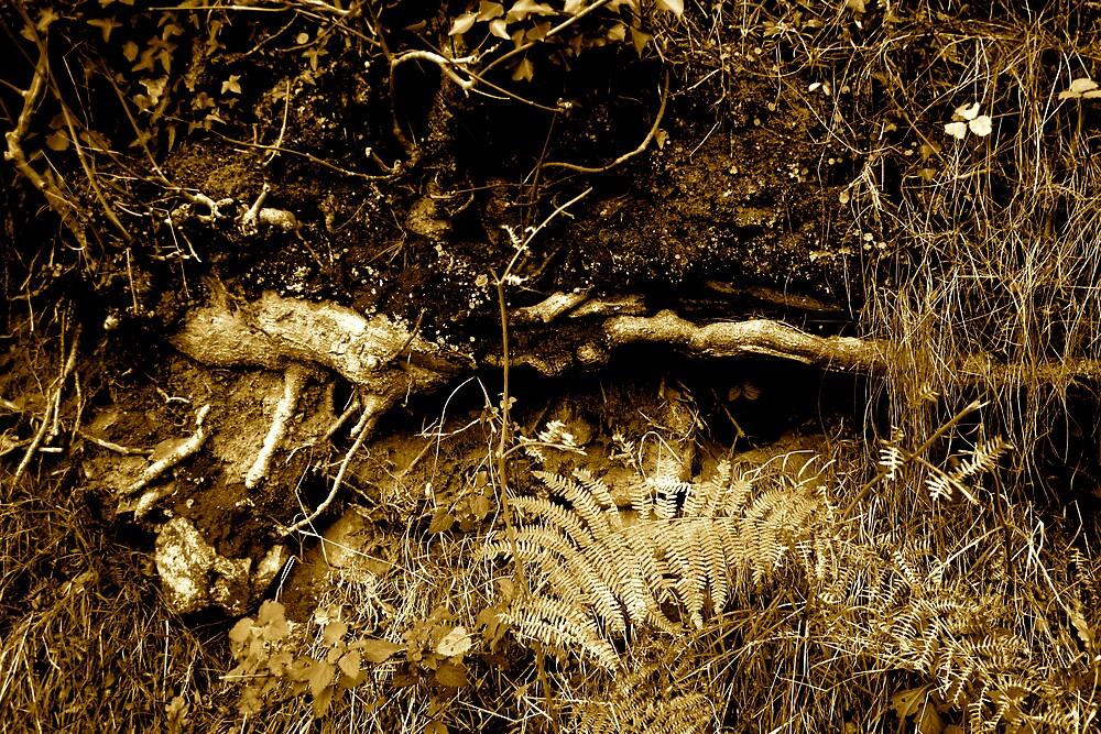 Rooted 16 by Amanda Gazidis