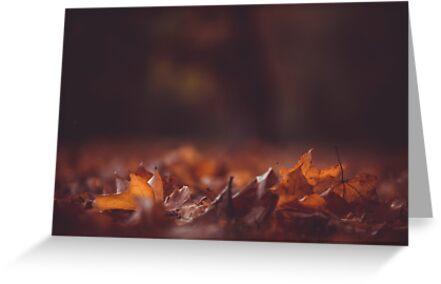 Autumn Leaf Frederiksberg, Danmark Postcard by Kiguni