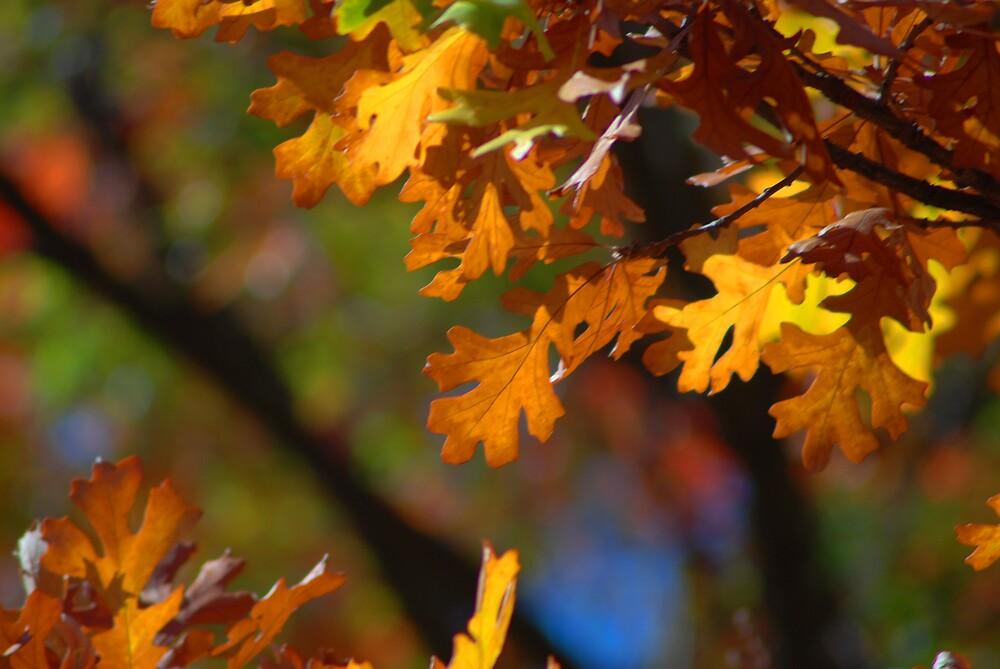 Fall Beautiful  Colors by kentuckyblueman