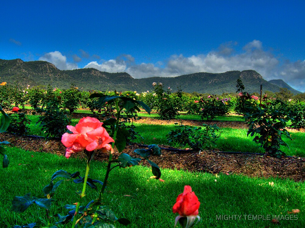 VINEYARD VISTA by MIGHTY TEMPLE IMAGES