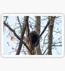 Porcupine In Fall Sticker