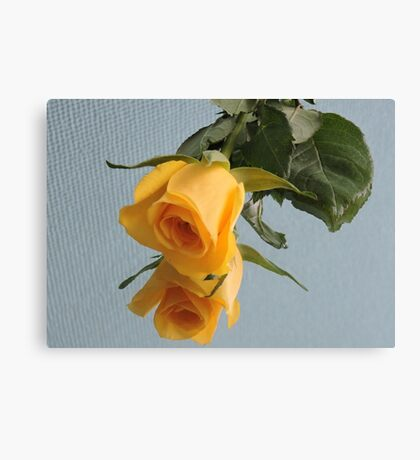 Yellow Rose on Glass Canvas Print