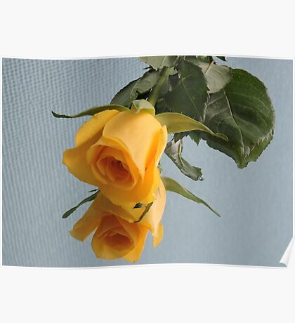 Yellow Rose on Glass Poster