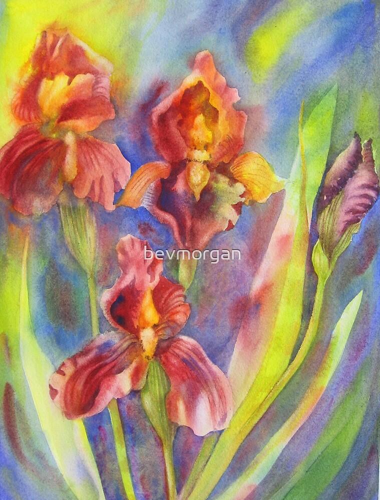 Fire Iris by bevmorgan
