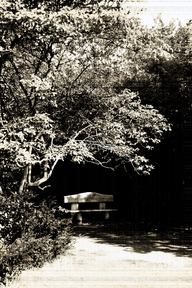 A seat in the park by kkmeer