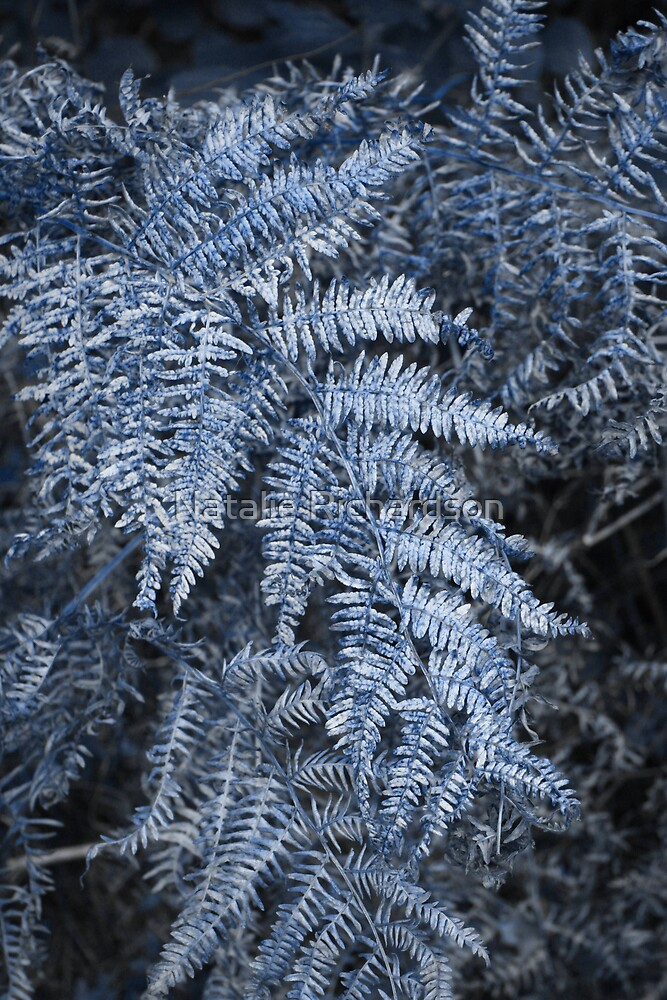 Frosted Fern by Natalie Richardson
