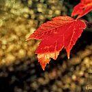 Autumn Gold by Anita Pollak