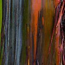 Abstract of Bark on a Rainbow Eucalyptus Tree 2 by photosbyflood
