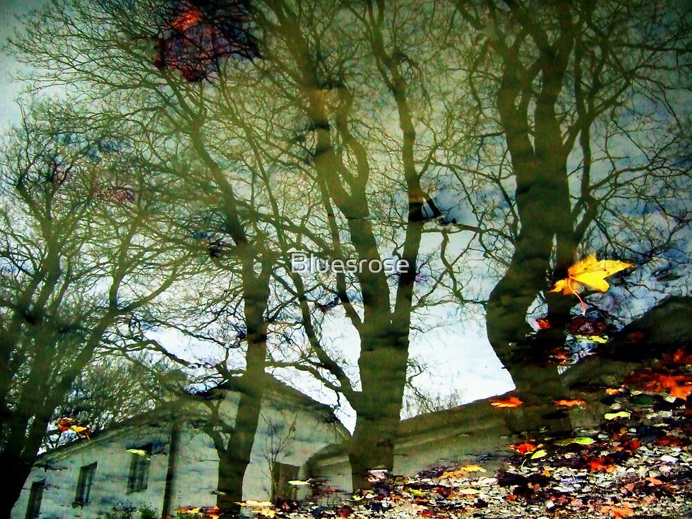 Autumn puddle by Bluesrose