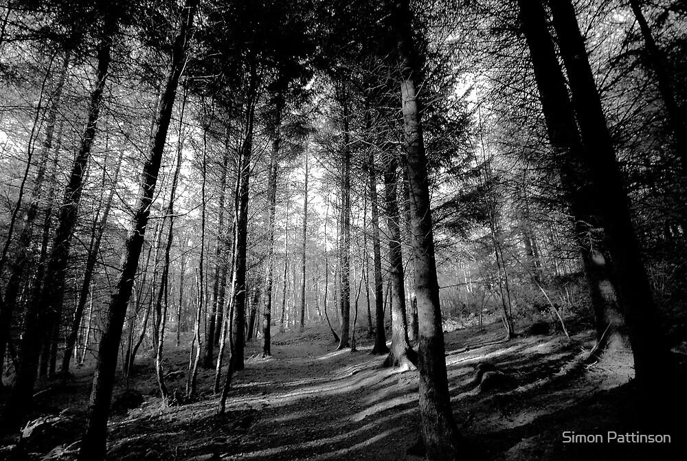 Lakeside Walk - Shadows  by Simon Pattinson
