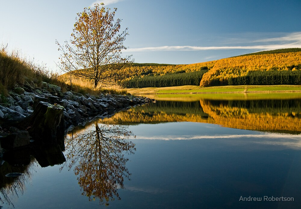 Autumn Gold by Andrew Robertson