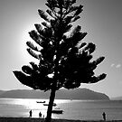 Pittwater by ADMarshall